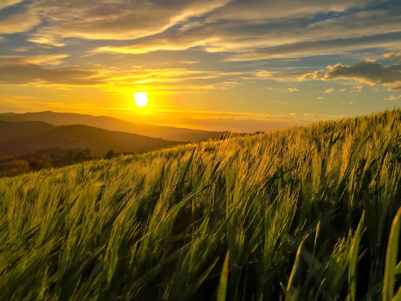 Sunset over grassy fields with a blue sky